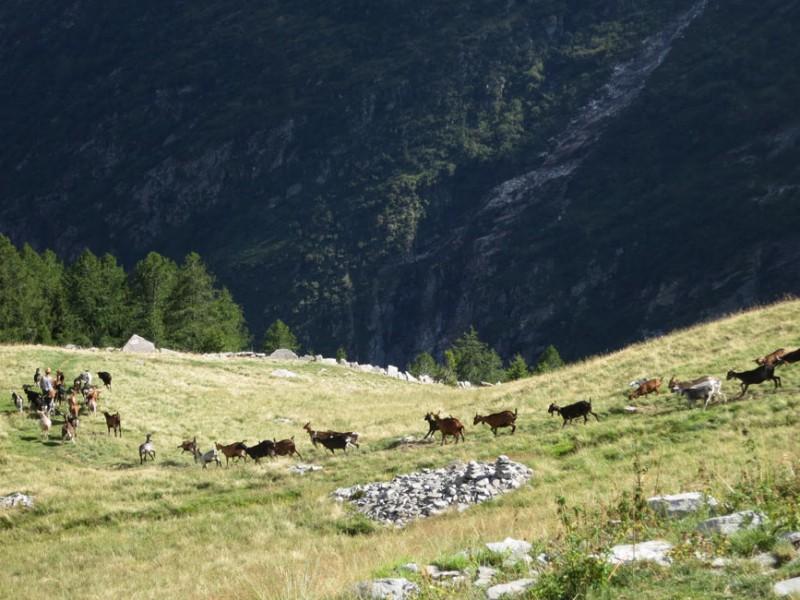 Val Onsernone alpeggi
